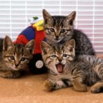 2月22日はネコの日です!